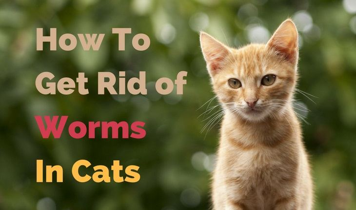 Types Of Cat Worms With Pictures