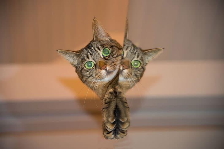 Personalities of Tabby Cat