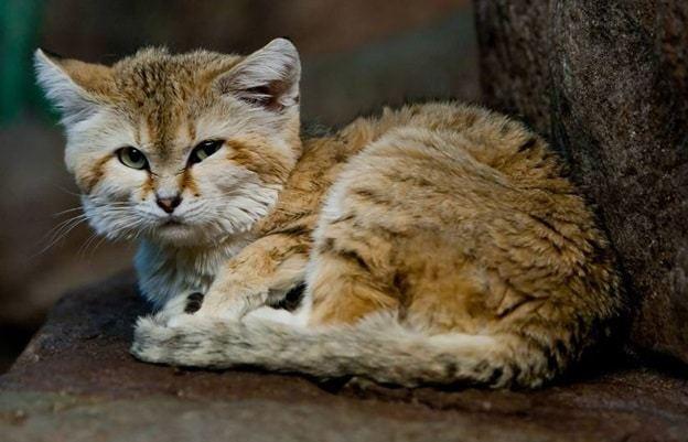 Some characteristics of cat