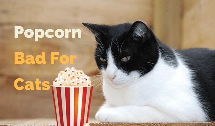 Is Popcorn Bad for Cats
