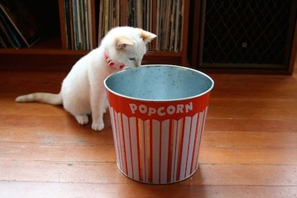 What will happen if a cat eats popcorn by mistake?