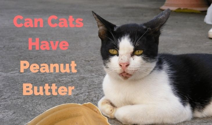can cats have peanut butter