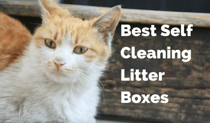 Best Self Cleaning Litter Box 2020.Best Self Cleaning Litter Boxes To Buy In 2018 2019
