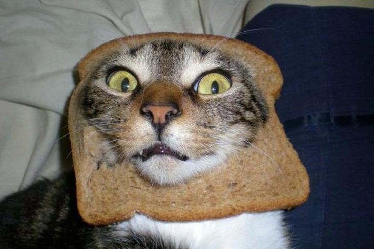 Can I Give My Cat Bread
