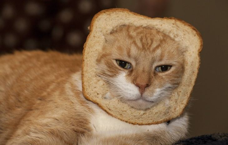 How To Find Out If Cats Can Eat Bread?