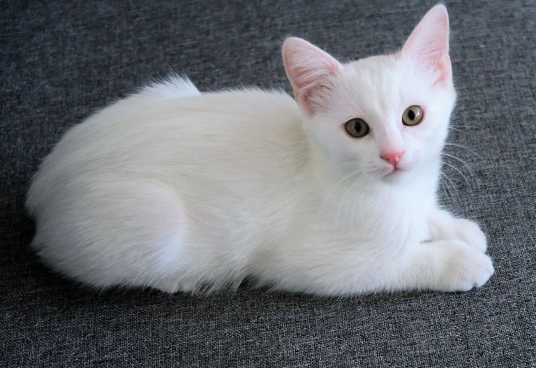 Face Loaf Cat Posture