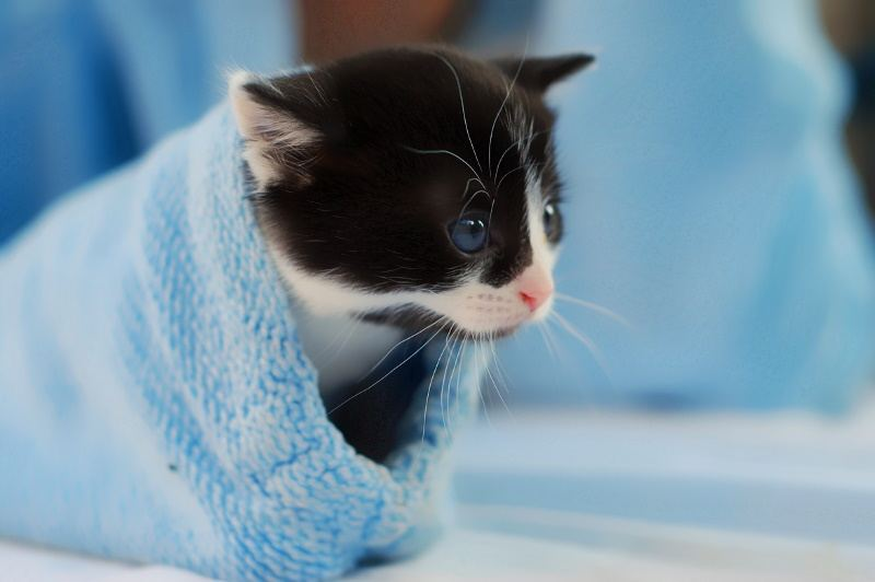 Do For Your 8 Weeks Old Kitten