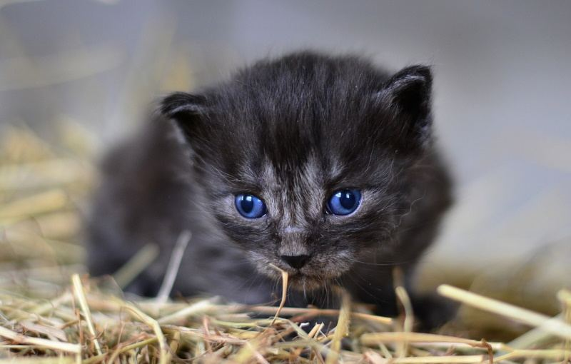 A 3 Weeks Old Kitten
