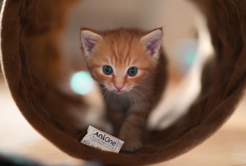 A 6 Weeks Old Kitten