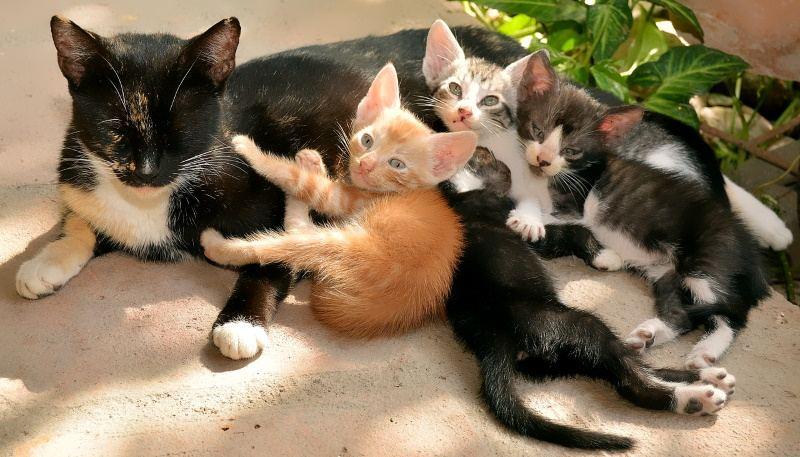 A Kitten Cat Growth Chart