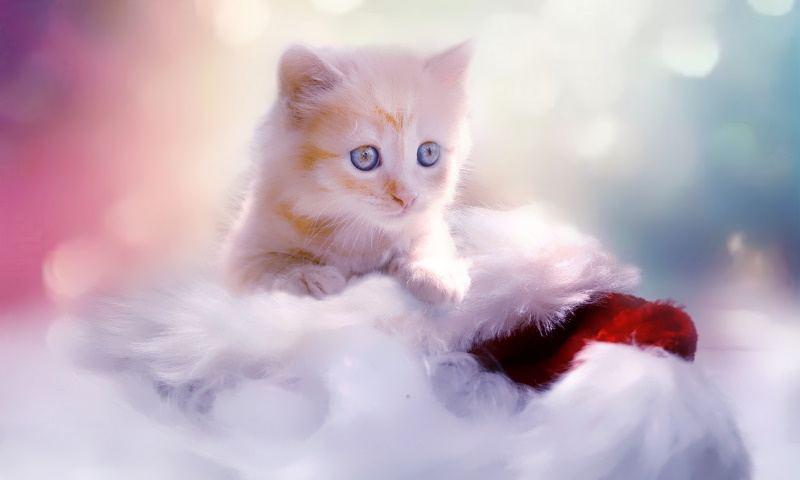 Kitten Is Full-grown