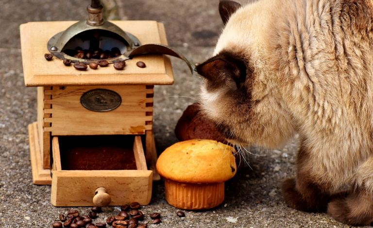 How Long Can Cats Go Without Eating? Food Issuse