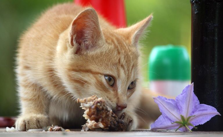 Why Is My Cat Not Eating Like Before